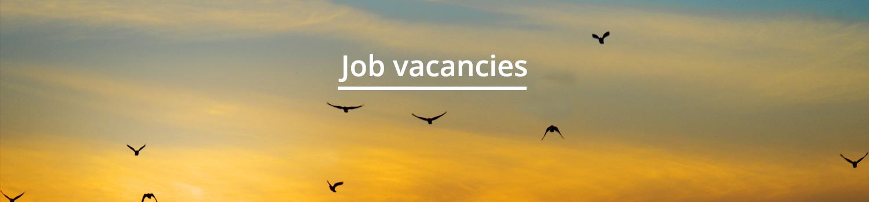 cabecera_Job Vacancies